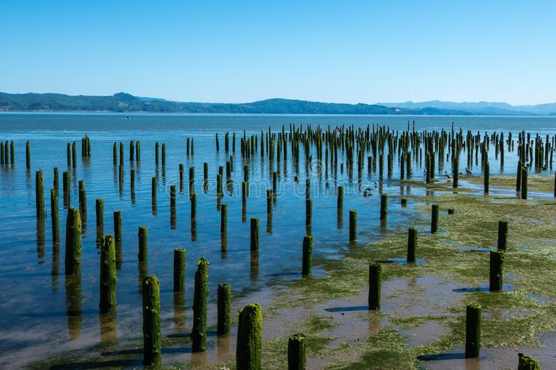 Old abandoned dock pillars covered in moss sit on the riverside. Of the Columbia River in Astoria, Oregon on a sunny summer day stock photo