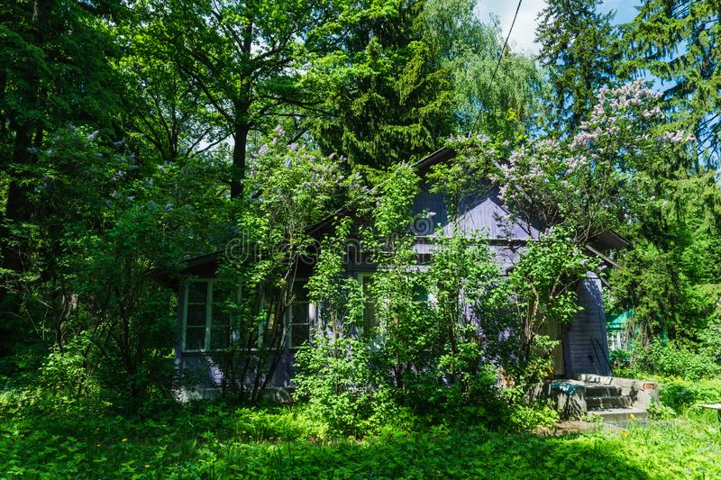 Old abandoned house in a summer forest. 1 stock photography