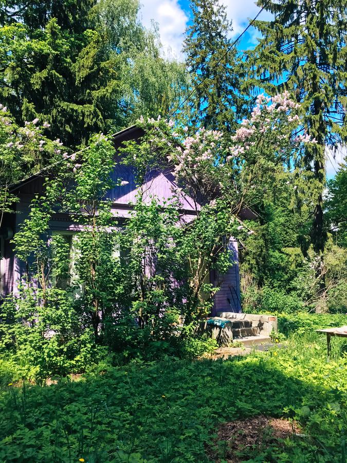 Old abandoned house in a summer forest. 1 royalty free stock image