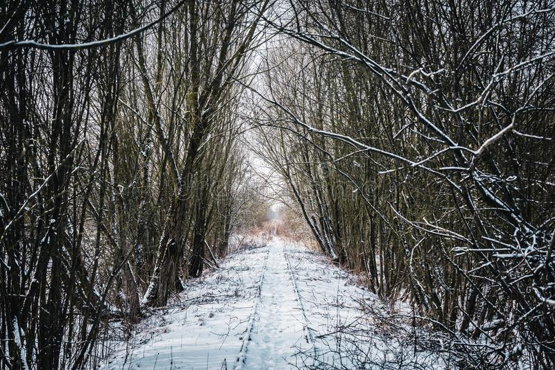 Old abandoned railway small tree tunnel in winter. Lithuania royalty free stock image