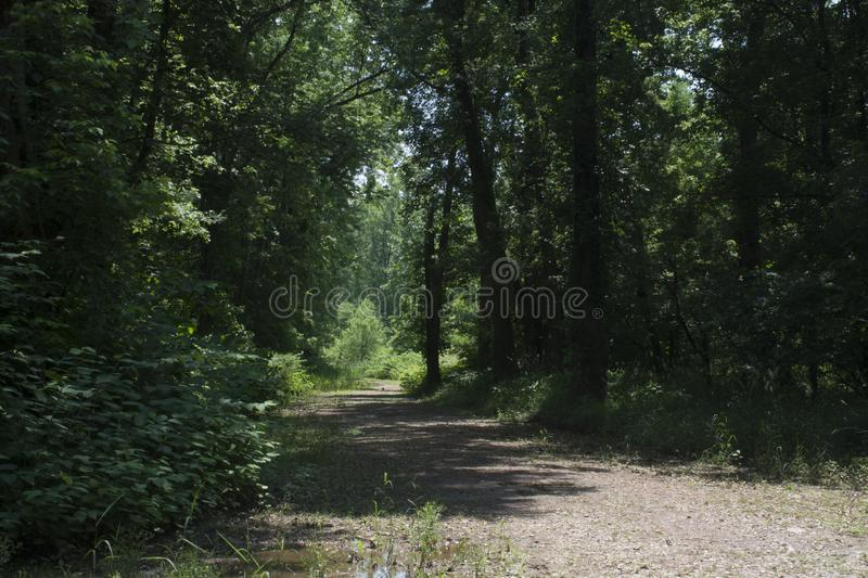 Abandoned gravel road through the forest stock photography