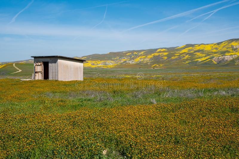 Old abandoned shack in a field of fiddleneck wildflowers, in Carrizo Plain National Monument in California.  royalty free stock photos