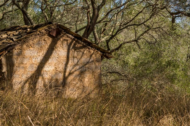 Old abandoned shed between the overgrown olive grove at Corfu Island Greece. stock photo