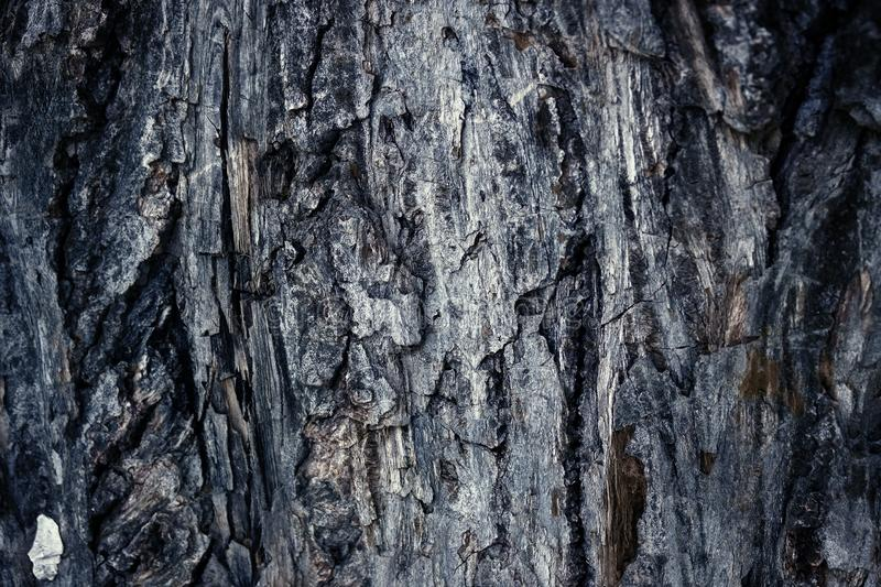 Old abrasive colored bark of pine, forest wooden texture. Winter, autumn, summer or spring, stock photos