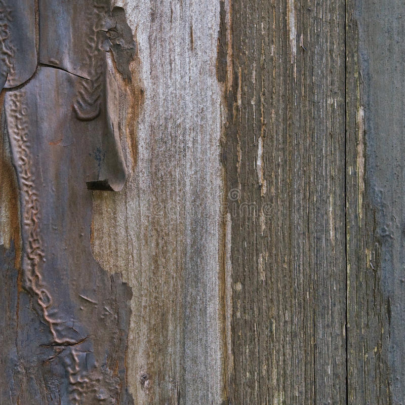 Download Old Aged Weathered Grunge Color-peel Wood Texture, Detailed Vertical Macro Closeup Of Natural Textured Grain Grungy Painted Wooden Stock Photo - Image: 78762404