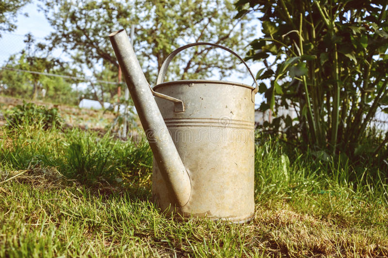 Old aluminum watering can in grass in the garden on spring time. Close up of metal watering pot at springtime. Gardening background stock photography