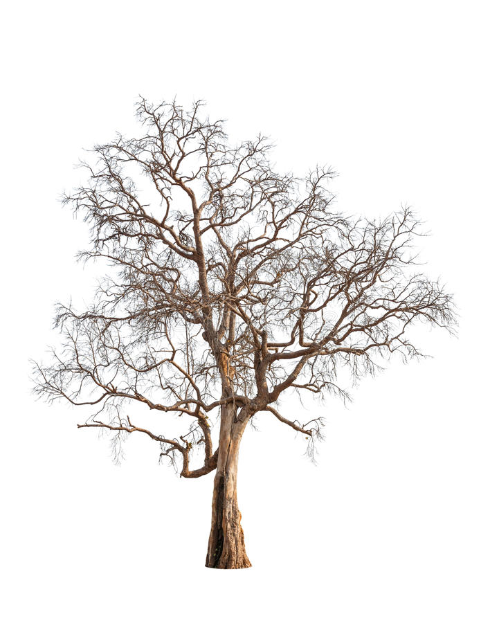 Free Old And Dead Tree Stock Image - 30232911