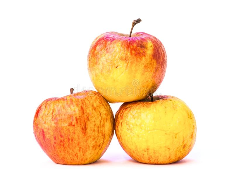 Old apples. Photo of three old wrinkled apples on white background royalty free stock photo
