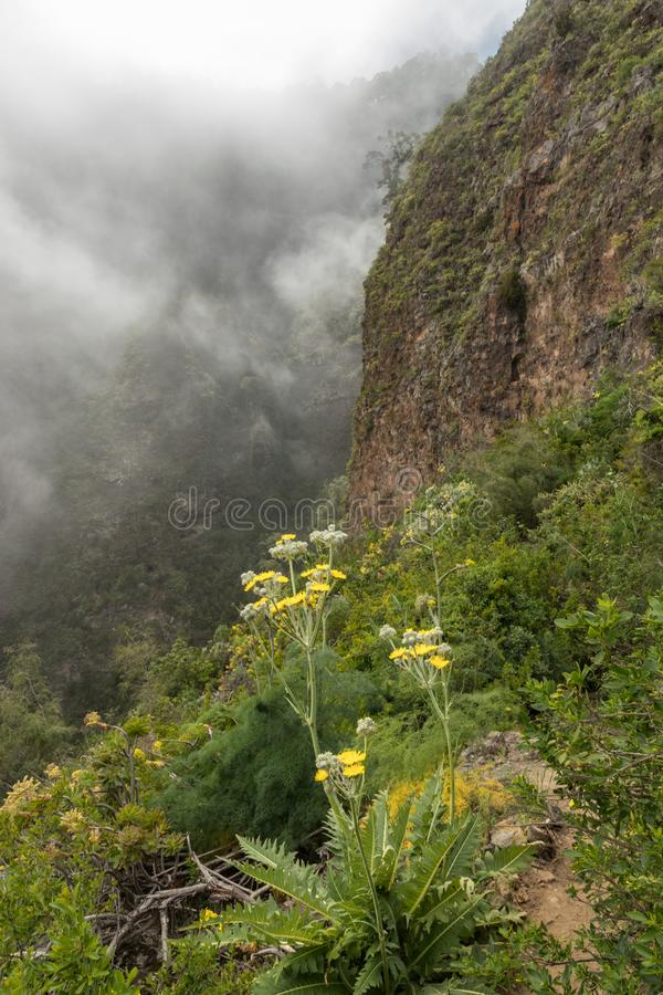 An old aqueduct now used as an adventure hiking trail Guimar valley. Trail in the fog through the mysterious mountains and caves. Tenerife, Spain royalty free stock photography