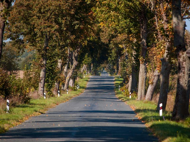 The Old Autumn Road between Trees in Europe royalty free stock photography