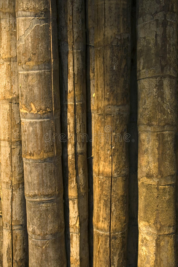 Old bamboo background royalty free stock photo