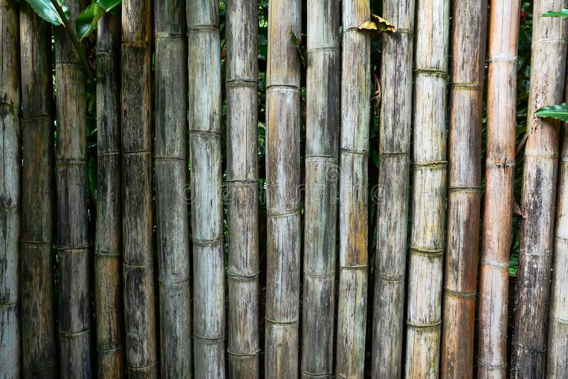 Old bamboo fence background. Bamboo fence background texture royalty free stock photography