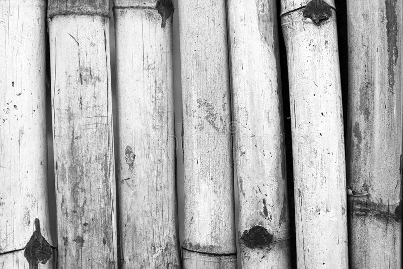 Bamboo Background Black and White. Old bamboo fence background in detail in black and white royalty free stock photography