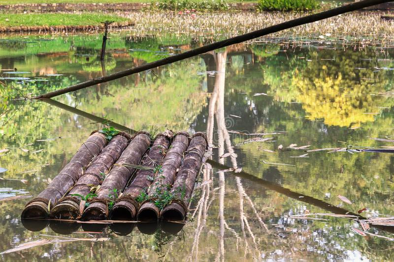 Old bamboo raft on the water of an abandoned pond. aquatic vegetation stock photos
