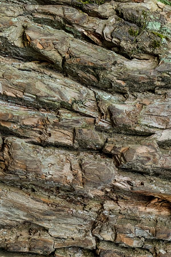 Old bark tree oak weathered old surface background rustic strips fractured surface stock photo