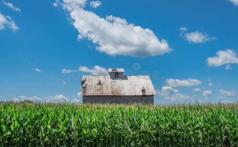 Old Barn in Cornfield With Cloud royalty free stock photos