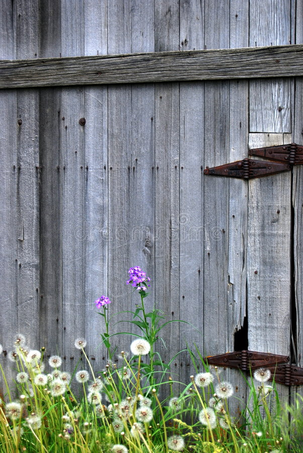 Free Old Barn Door And Flowers Royalty Free Stock Images - 5545449