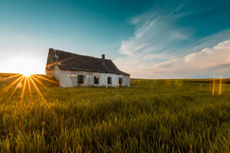 Old abandoned barn in a grainfield stock photo