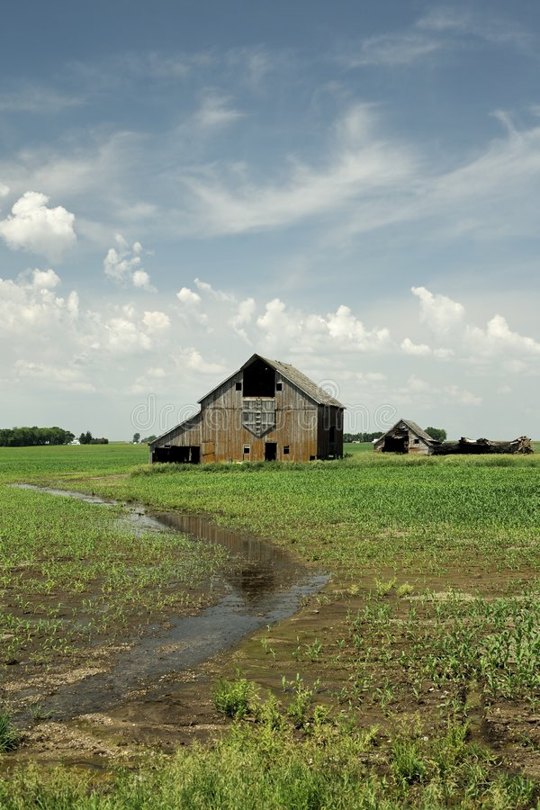 Download Old barn new crop corn stock image. Image of agriculture - 5854315
