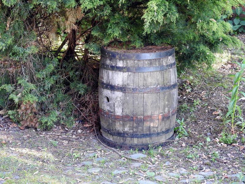 Old barrel with rusty hoops. An old wooden beer barrel with rusted hoops out in the garden stock images