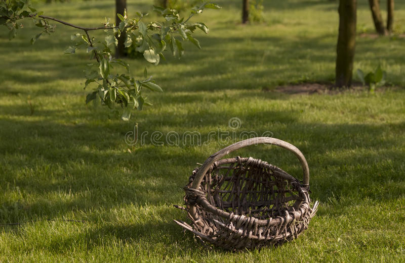 Download Old basket in orchard stock image. Image of selective - 24994541