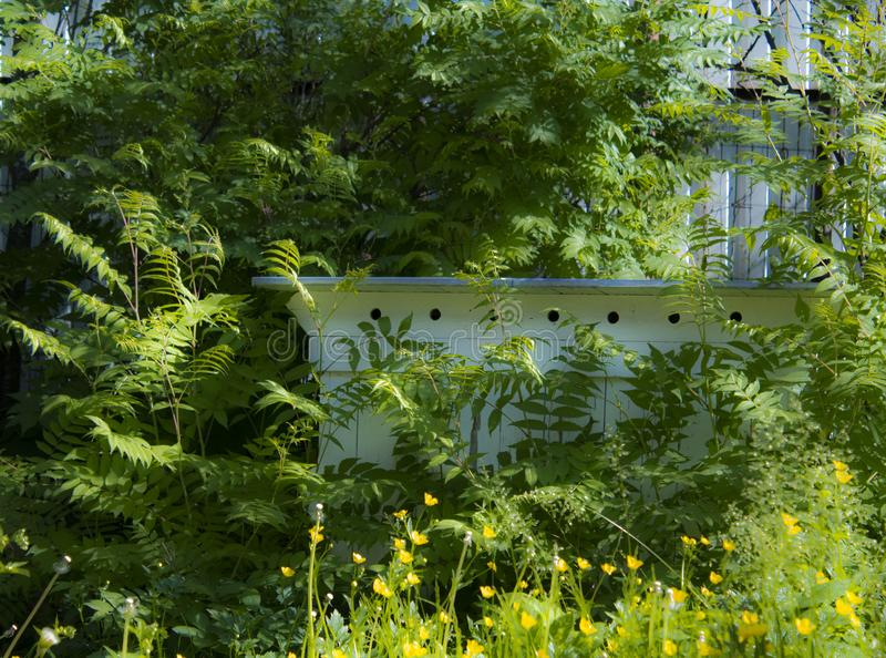 Old bee hive in greenery royalty free stock photo