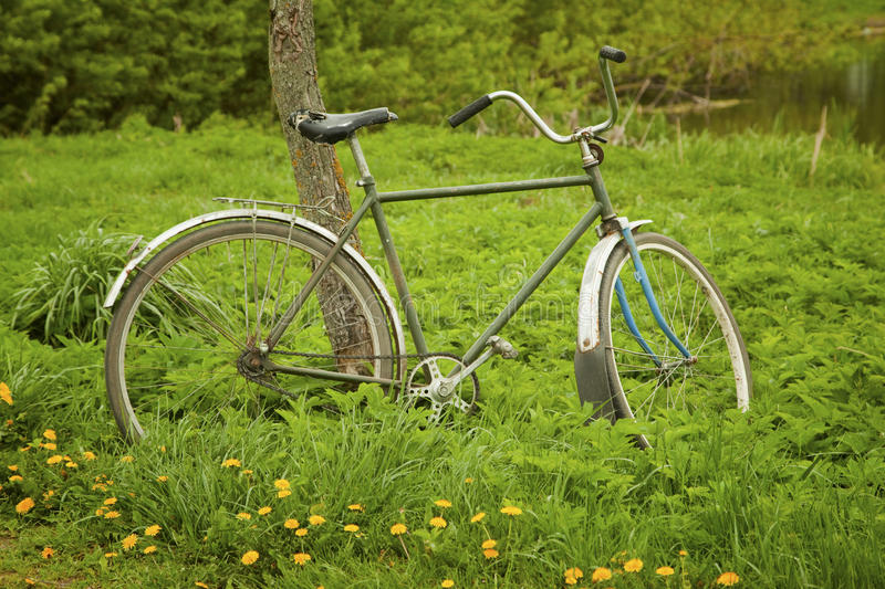 Download Old bicycle stock photo. Image of fresh, grass, healthy - 25411338