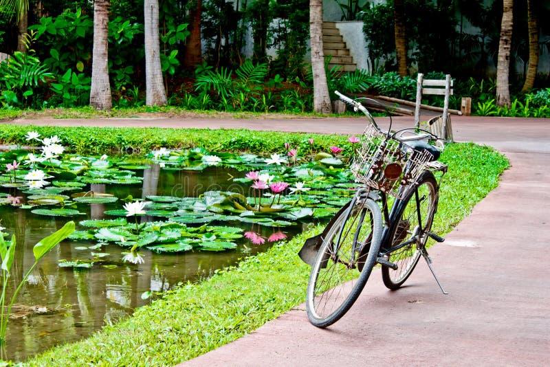 Download Old Bicycle Beside Lotus Pond Stock Photo - Image: 26628032