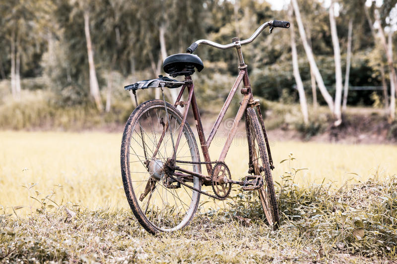 Old bicycle in the rice field stock images