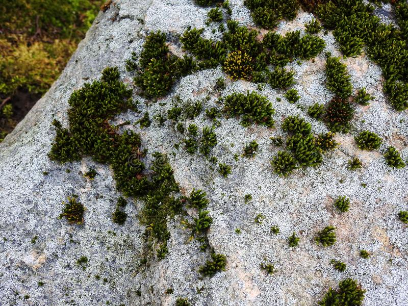 Old big stone with moss, Lithuania stock images