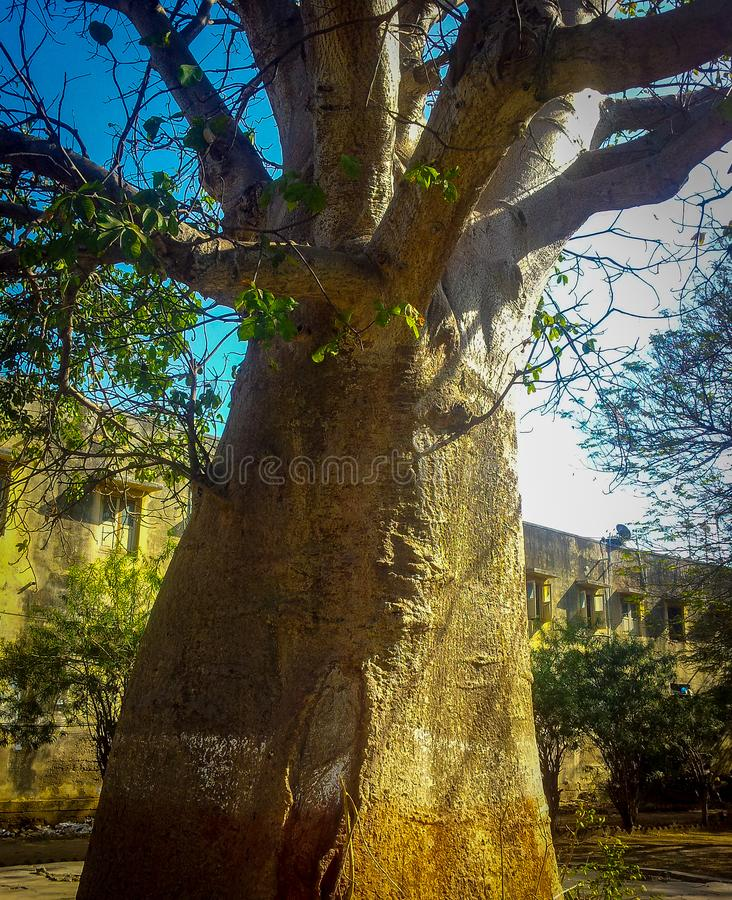 Old big tree with lot of branches. Big tree in the middle of a park in Gujarat India. Travel, travelphotography, nature, travelgram, love, photooftheday royalty free stock photography
