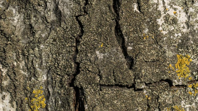 Old birch bark close up stock photography