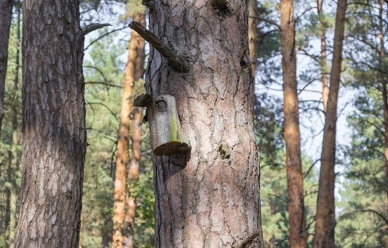 Old birdhouse on a tree for forest birds in the forest. Old ruined birdhouse on a pine tree, the house in the forest is not suitable for forest birds, the stock photo