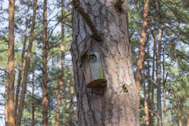 Old birdhouse on a tree for forest birds in the forest. Old ruined birdhouse on a pine tree, the house in the forest is not suitable for forest birds, the royalty free stock images
