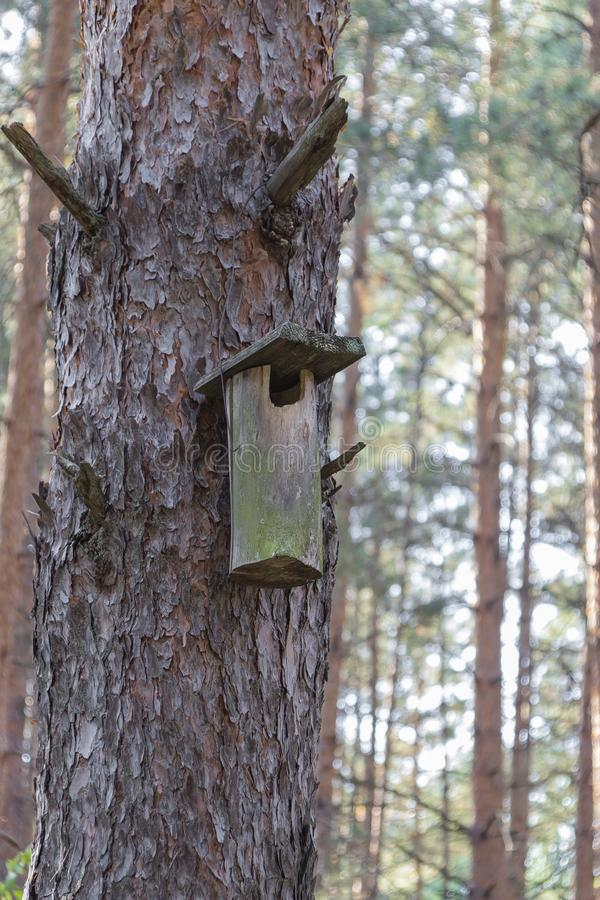 Old birdhouse on a tree for forest birds in the forest. Old ruined birdhouse on a pine tree, the house in the forest is not suitable for forest birds, the royalty free stock photos
