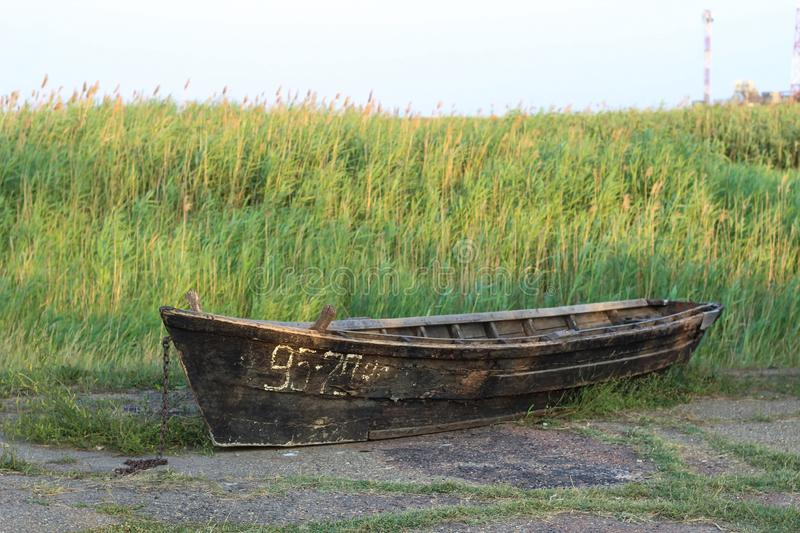 Old black wooden boat amid the reeds on a summer evening.  stock photography