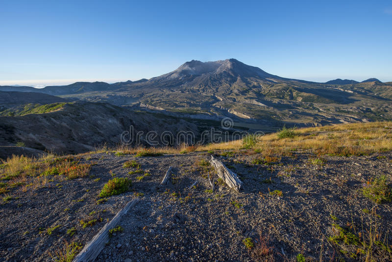 Old blast zone of Mount Saint Helens. Fallen trees from within the Mount Saint Helens blast zone, and recovering landscape royalty free stock photography
