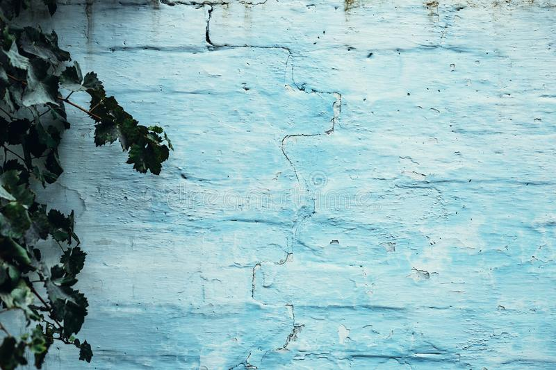 Blue painted brick wall with green leaves royalty free stock photo