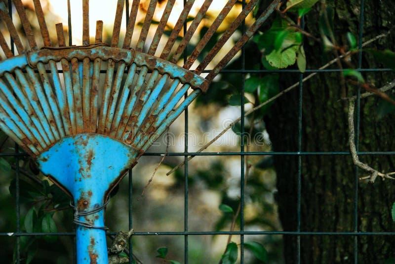 Download Old blue rake stock image. Image of plants, season, work - 5529927