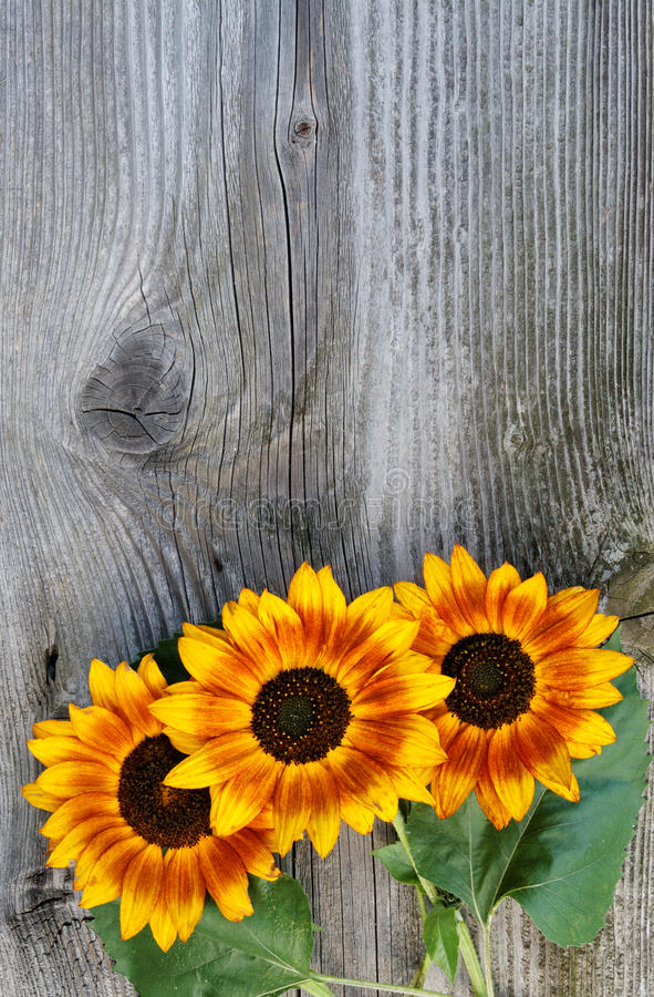 Old boards with sunflowers stock photo