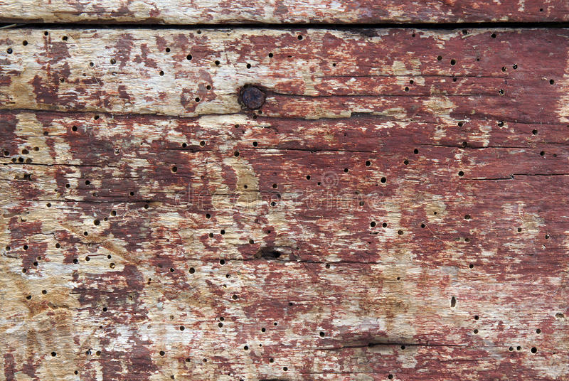 Old boards with woodworm holes. And burrows created by beatles Anobium punctatum stock image