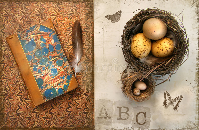 Old books with bird nests on grunge stock photo