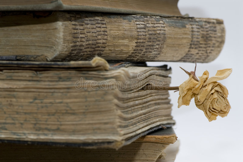 Old books in library. A bookmark in the old book from a dry rose stock photos