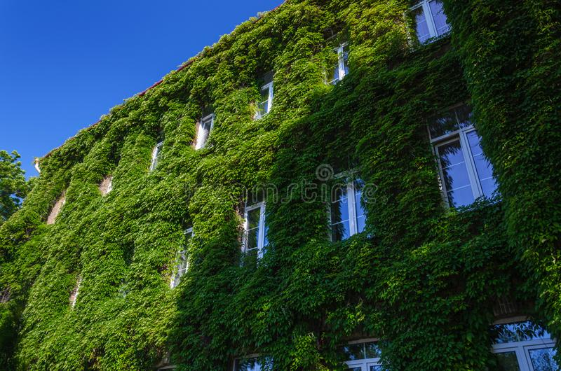 Old Brick Luxury Building Covered with Ivy stock images