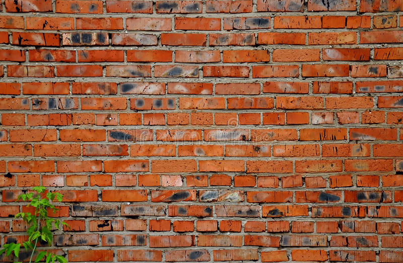 Old brick masonry with plant stock photos