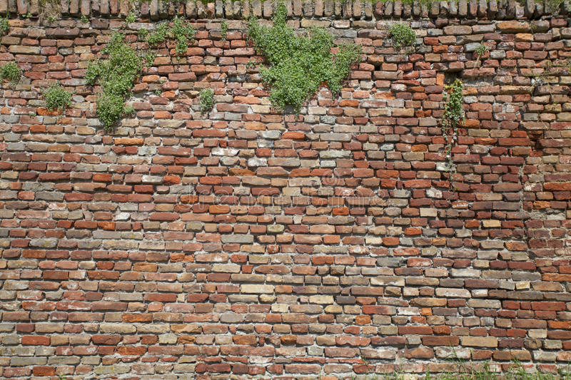 Download Old brick wall stock photo. Image of leaf, damaged, retro - 17432866