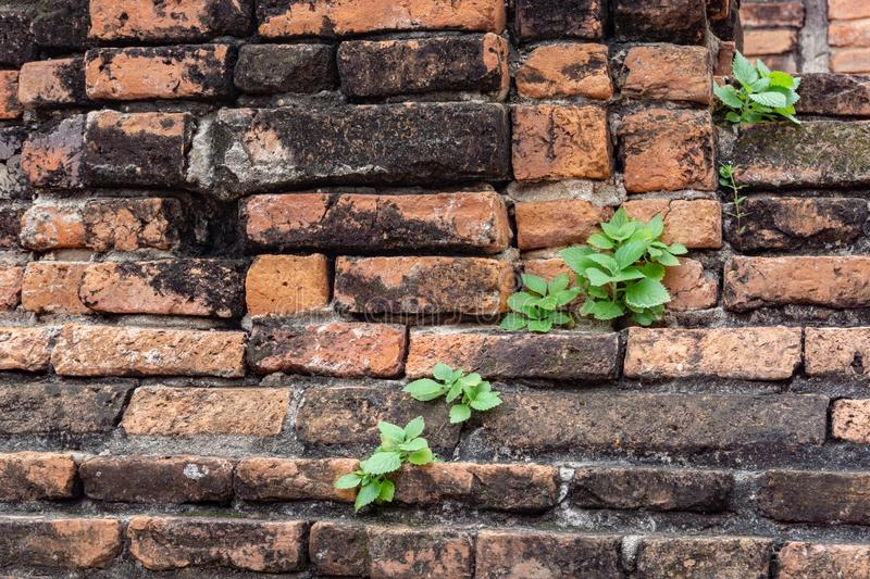 Old brick wall, Close Up old texture of red stone blocks. stock photography