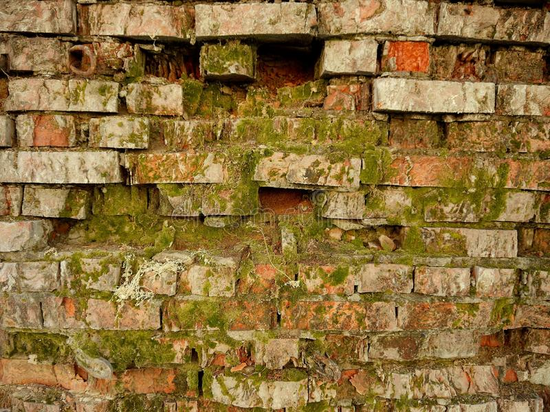 Old brick wall covered in moss. Red and gray bricks. Green moss Conservation concept of natural monuments royalty free stock photography