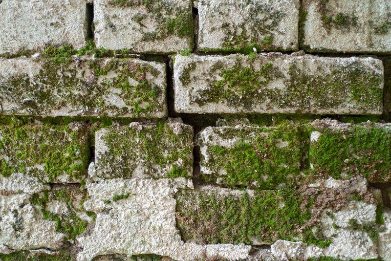 An old brick wall with moss. A closeup of an old white brick wall with moss royalty free stock photos