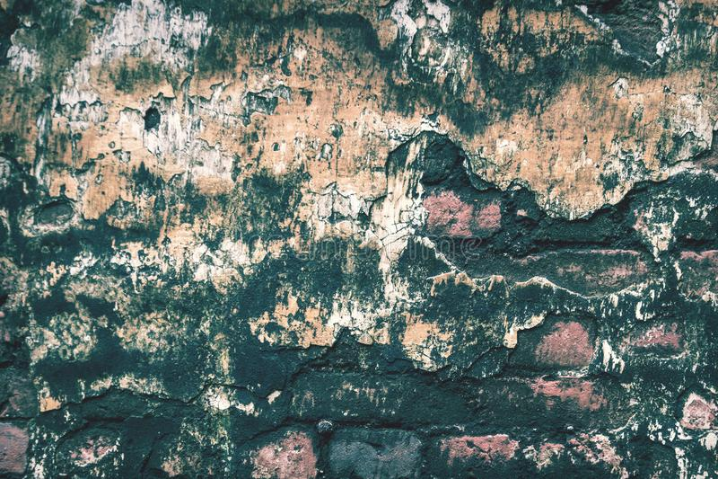 Old Brick Wall with Moss texture background royalty free stock image